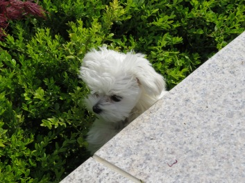 playing peepo in the bushes