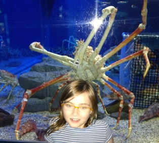 Katrine get up close to a spider crab.