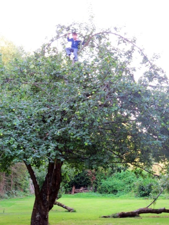 But Gregor is very at home in trees.