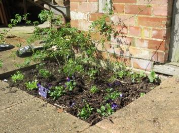 Gregor's flower bed.